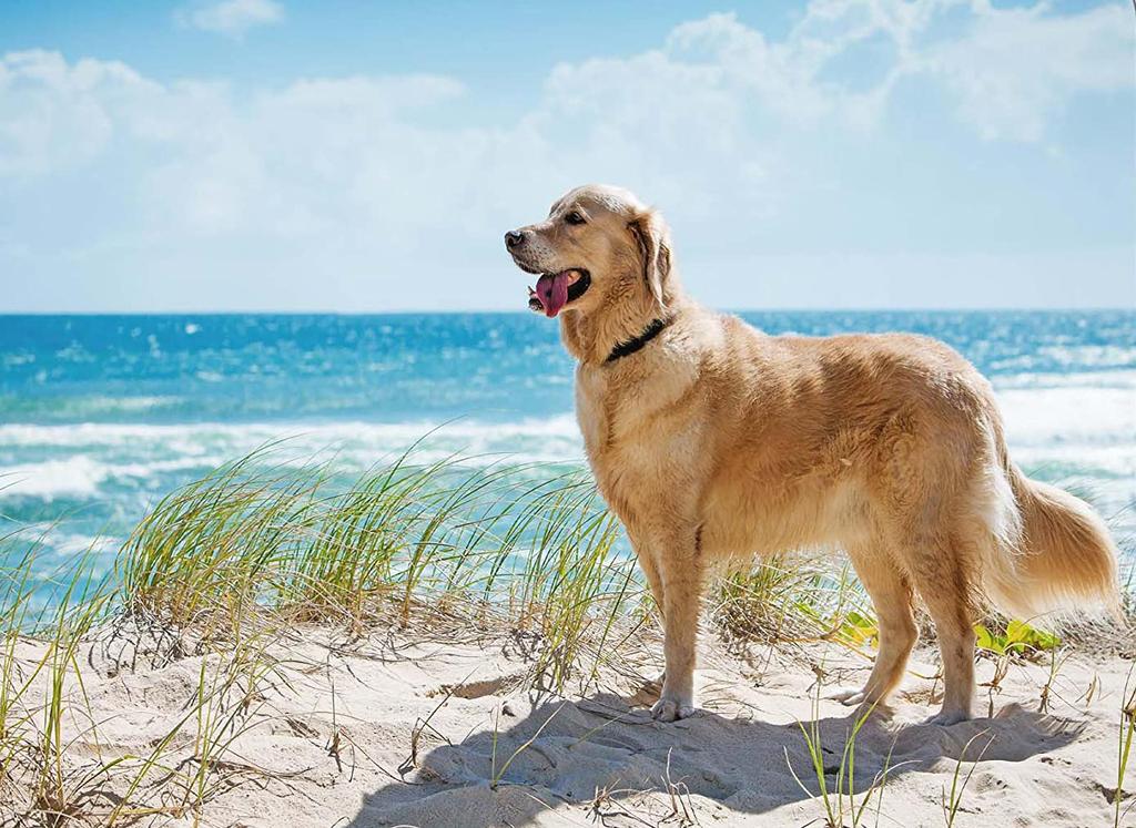 Tutti al mare... cani compresi! Spiagge per cani in Liguria